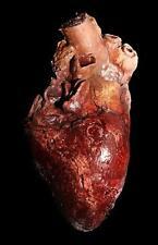 Life Like Human Heart - Haunted House Halloween Horror Prop - The Walking Dead