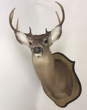 New listing Vintage Deer Head Shoulder Mount ~ Taxidermy ~ Local Pickup Only