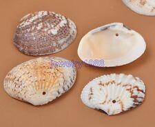 10pcs Drilled Sea Shell Ocean Aquarium Craft Decor Natural Shell Scallop 25-40MM