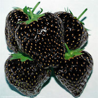 Black Strawberry Fruit 100PCs Seeds Bonsai Plants Home Garden climbing Bloom Pot