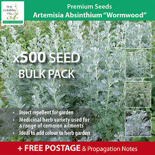 """ARTEMISIA ABSINTHIUM """"Wormwood"""" seeds. Herb used as insect repellent outdoors."""