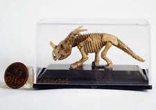 Jurassic Museum Dinosaurier Fossil Bone Styracosaurus Skeleton Standmodell A11