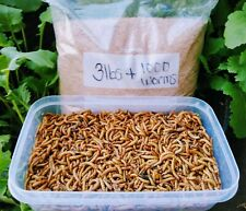New listing 1000 Live Mealworms Plus 3 Pounds Wheat *Free Shipping*