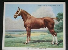 Active Vanner    Heavy Van Horse     Vintage Illustrated Card  # VGC