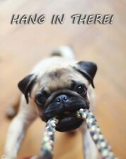 Pug Dog Hang In There Motivational Poster Print Veterinarian Classroom MVP575