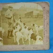 Stereoview Photo Mr Chapman's Kennels Pointers Dogs Excelsior Stereoscopic Tours