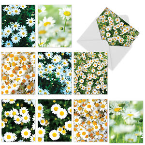 10  All Occasion Blank Cards Assortment - OOPSY DAISIES M6031