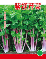 Purple Celery 10000 seeds Vegetable Garden Retail package 原装彩包紫梗芹菜蔬菜种子