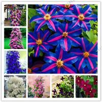 Clematis Plants Perennial Courtyard Bonsai Flowers Home Garden NEW 100 Pcs Seeds