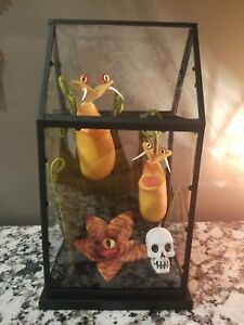 Hyde And Eek Boutique Yellow Creepy Face Faux Plants In Small Terrarium