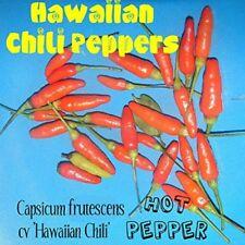 ~HOT HAWAIIAN CHILI PEPPER~ Capsicum frutescens cv Hawaiian Chili 60 Seeds