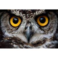 5D Diamond Painting Embroidery Cross Craft Stitch Arts Mural Owl Animal Bird