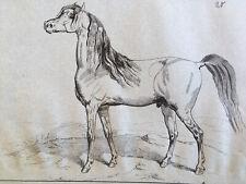 Très beau Dessin Cheval  encre 1850 grand
