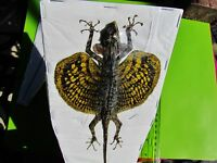 Draco Flying Dragon Lizard (Yellow) Taxidermy Draco haematopogon FAST FROM USA