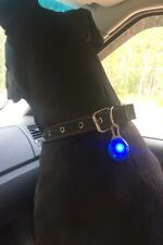 Pet Night Safety LED Flashlight,Push Button Switch Glow In The Dark Bright BLUE
