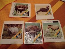 5 Sammelbilder Hanuta  Geschützte Tiere aus aller Welt 1985