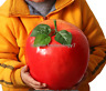 HUGE ARTIFICIAL APPLE FRUIT FAKE FAUX VEGETABLES CHILDREN HOUSE TEACHING PROPS R