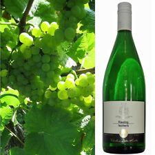 Riesling feinherb 2016 Weinhaus Dieter Kuntz Wahnsinns Weißwein 18 Flaschen