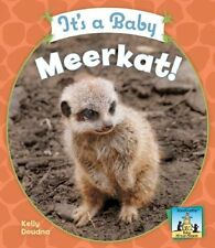 Its a Baby Meerkat! (Sandcastle: Baby African Ani