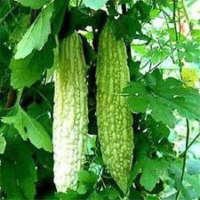Balsam Pear Seed Bitter Melon Organic Vegetable 1 Pack 10 Seeds  ✿