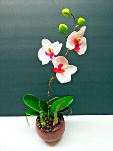 """13"""" Phalaenopsis Orchid With Roots And Leaves Silk Flower Floral Arrangements"""