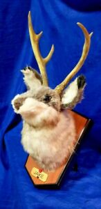 Singing Jackalope Rabbit Dancing Gemmy Animatronic Mounted Taxidermy Head 2000