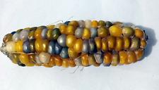 Corn Yellow Gem Stone - A Rare, Unique & Stunning Glass Gem Corn Variety!!!