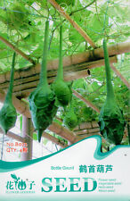 4 Original Pack Seeds Crane Head Shape Bottle Gourd Seeds Organic Vegetable B072