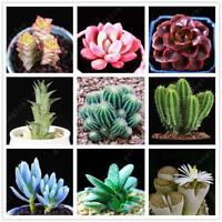 100PCs Cactus Bonsai Seeds Succulents Rare seed ornamental plants in Home garden