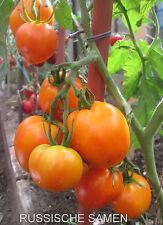 "N.L.Chrestensen /"" Cuor di Bue /"" Ochsenherz ca 15  Samen Sämereien Tomaten 40372"