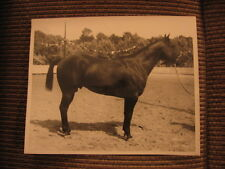 "AQHA Grand Champion American Quarter Horse ""King's Joe Boy"" Original 1957 Photo"