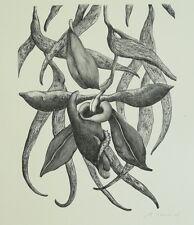 Schmückle, Miron (geb. 1966) - Blüte Lithografie 2004