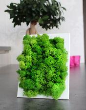 "Moosbild Islandmoos Green Style Nature Preserved Moss Art Wall  ""Little Oasis"""