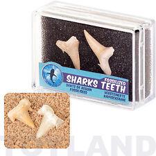 Denti fossili di squali FOSSILI Ragazzi Ragazze Regalo Jurassic Festa Di Compleanno Borsa
