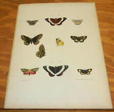 1854 COLOR Insect Print/BORDER,BLUE,MALTESE BUTTERFLIES/COMELY,CATERPILLAR MOTHS