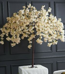 🌼1.5 metre 5 foot weeping hanging drooping blossom tree white wedding events🌼