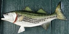 "Striped Bass Taxidermy Quality 18"" Wall Mount"