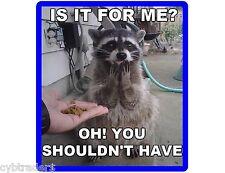 Funny Raccoon Begging Food  Refrigerator / Tool Box Magnet