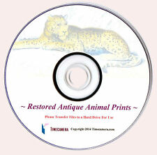 ANTIQUE ANIMAL PRINTS - Uniquely Restored/Enhanced - Print-Making Images DVD