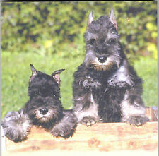 Schnauzer  List Pads ...Adorable pups ! ...2  pads .. 100 sheets