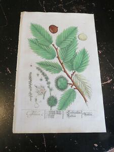 Botanicals - Elizabeth Blackwell, published Nuremburg Germany ca:1757