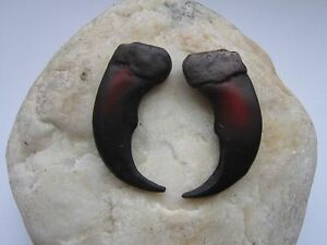 """2 Resin Grizzly Bear Claws 2"""" Jewelry and Craft Projects Necklace Replica CL2"""
