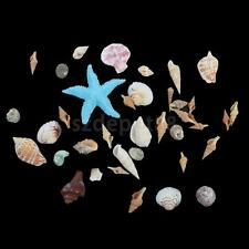 Starfish Sea Star Shell Beach Wedding Craft DIY Making Decor Decorations