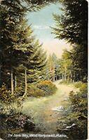 West Harpswell Maine~The Dark Way: Path Thru Evergreen Trees~1908 Postcard