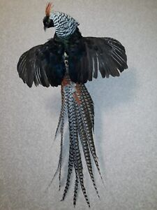 Taxidermy Nice Pheasant Excellent Composition!!!