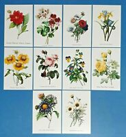 Set of 10 NEW Flowers Postcards (set 1) for Postcrossing & Postcardsofkindness