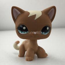 LPS 1170 Brown Shorthair Cat Littlest Pet Shop Blue Eyes Kitty Curl Hair Gift