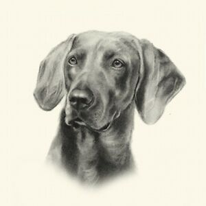 Dog Show Ring Number Clip Pin Breed - Weimaraner