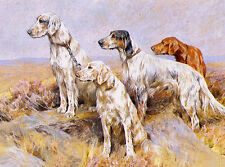 ENGLISH SETTER CHARMING DOG GREETINGS NOTE CARD THREE DOGS AND IRISH SETTER