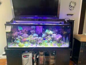 Reef Breeder Aquarium Light For Tank, Fish, Reef, Coral